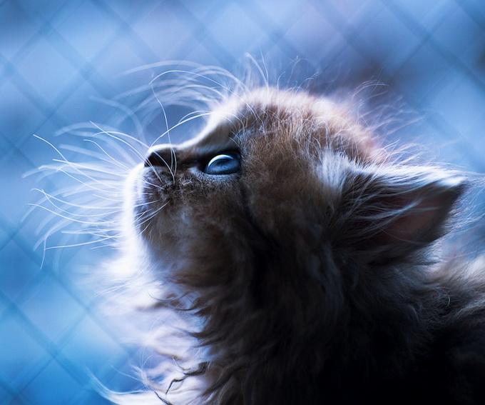 Самый очаровательный котенок в мире (680x567, 110Kb)