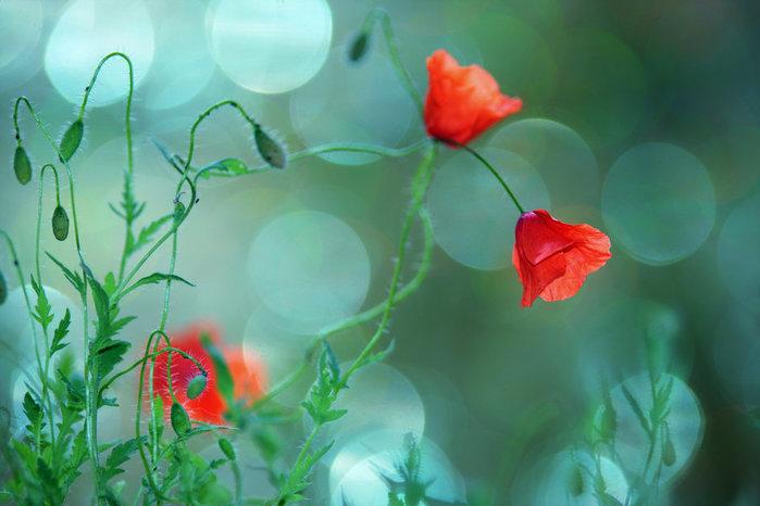 3166706_flowers_in_my_heaven_by_rezzand3hm6ss (800x530, 63Kb)