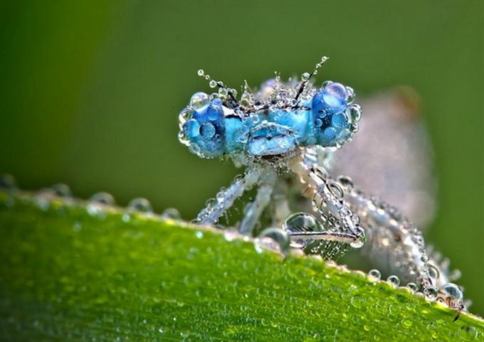 макрасъемка насекомых фото 5 (680x481, 96Kb)
