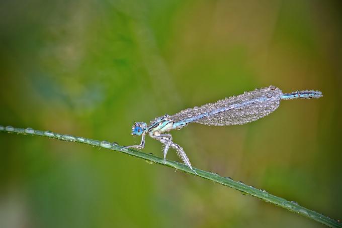 макрасъемка насекомых фото 5 (680x454, 333Kb)