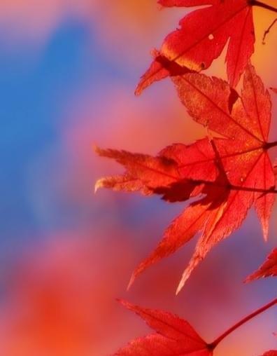 осень (2) (396x508, 21Kb)