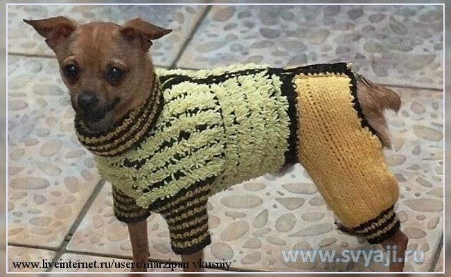Комбинезон для маленькой собаки вязаный своими руками