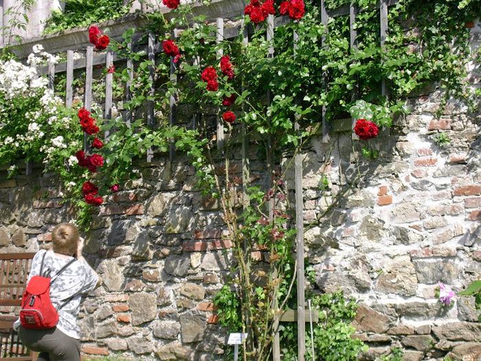 Замок Шаллабург (Schallaburg Castle) - прекрасный замок эпохи Возрождения. 49121