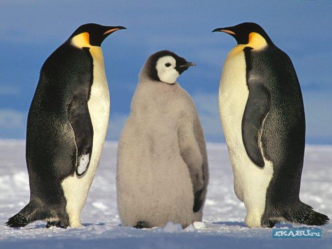 ... красочные высокого качества обои с изображением интересных животных…