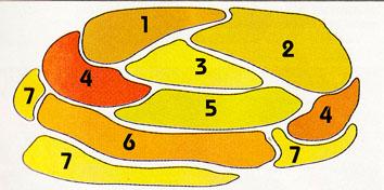 574305-453453-3-4-354344544 (354x176, 58Kb)