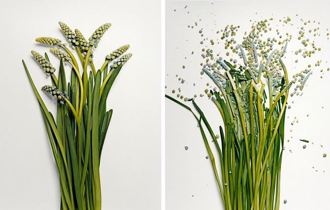 Разбитые цветы4 (680x433, 113Kb)