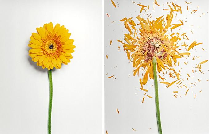 Разбитые цветы6 (680x437, 99Kb)