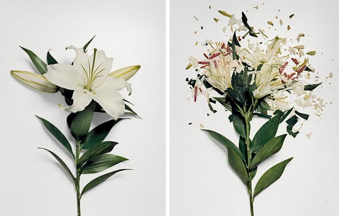 Разбитые цветы (680x433, 97Kb)