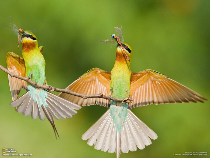 животные в фотографиях National Geographic 1 (700x525, 130Kb)