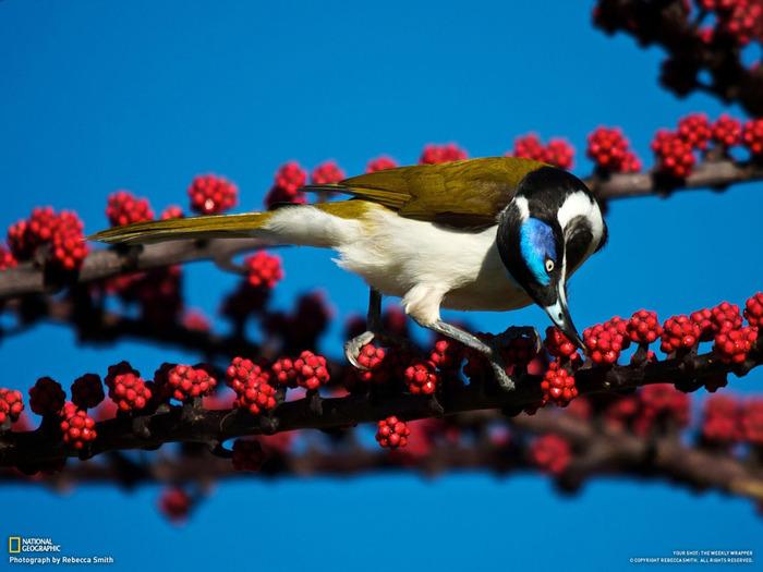 животные в фотографиях National Geographic 7 (700x525, 108Kb)