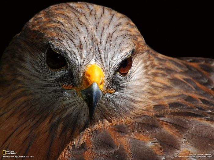 животные в фотографиях National Geographic 9 (700x525, 170Kb)