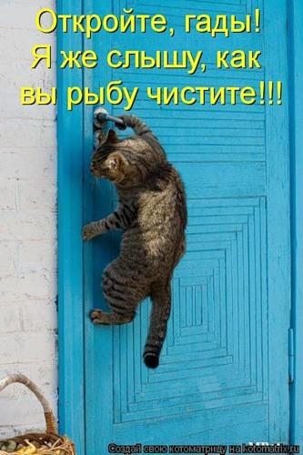 кот лезет в дверь (333x500, 60Kb)