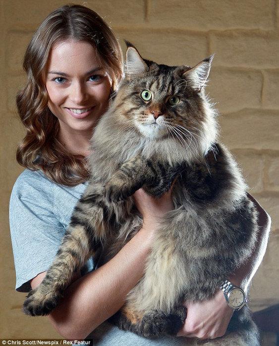 самый большой кот в мире (563x700, 119Kb)