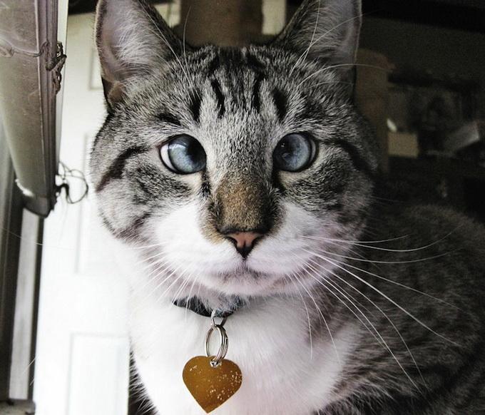 косоглазый кот фото 3 (680x582, 152Kb)