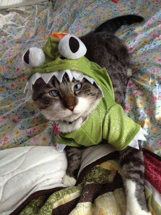 смешные коты фото (525x700, 149Kb)