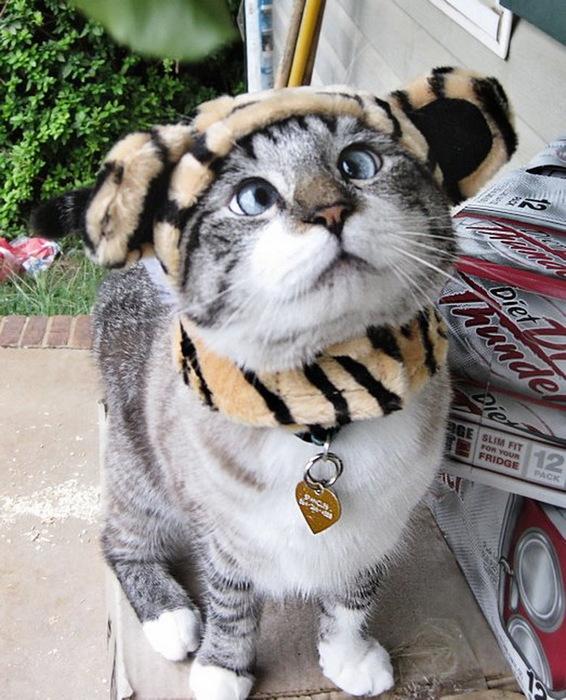 смешные коты фото 1 (566x700, 149Kb)