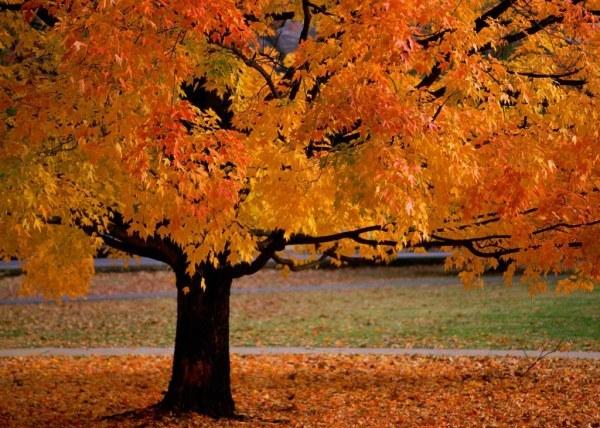 осенние листья (600x428, 101Kb)
