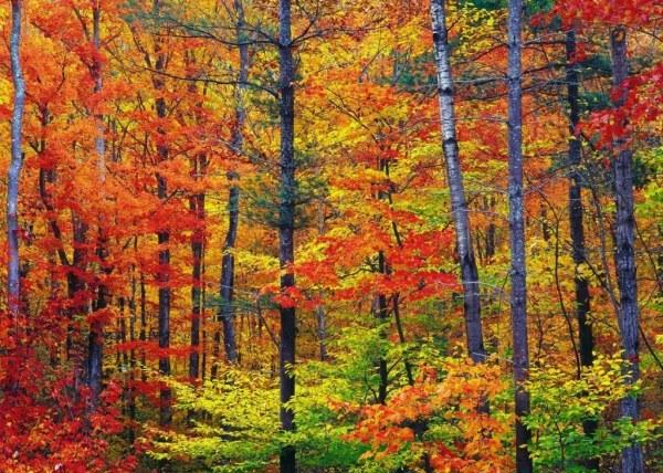 осенние листья2 (600x428, 135Kb)
