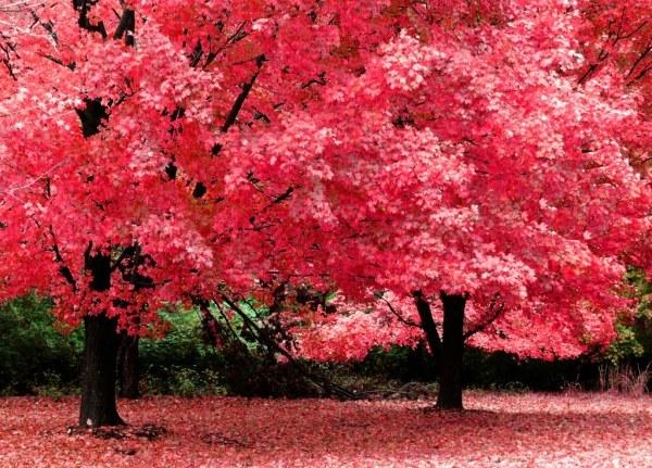 осенние листья4 (600x431, 119Kb)
