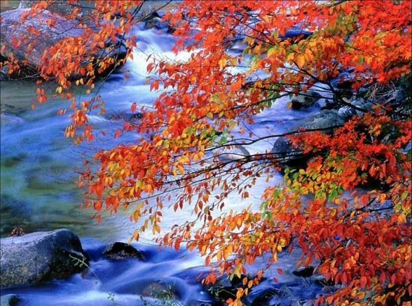 осенние листья6 (600x445, 130Kb)
