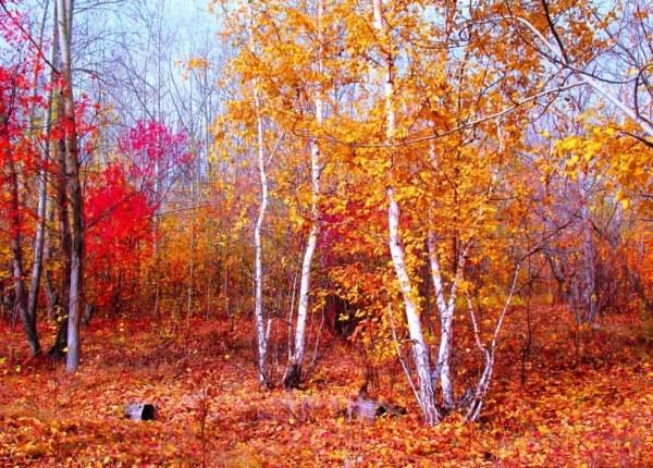 осенние листья8 (600x430, 136Kb)