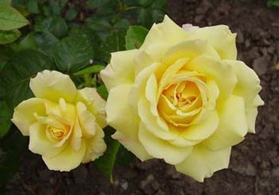 275444_flowers_pic (560x392, 34Kb)