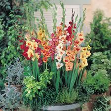 4721164_gladiolus_1 (225x225, 14Kb)