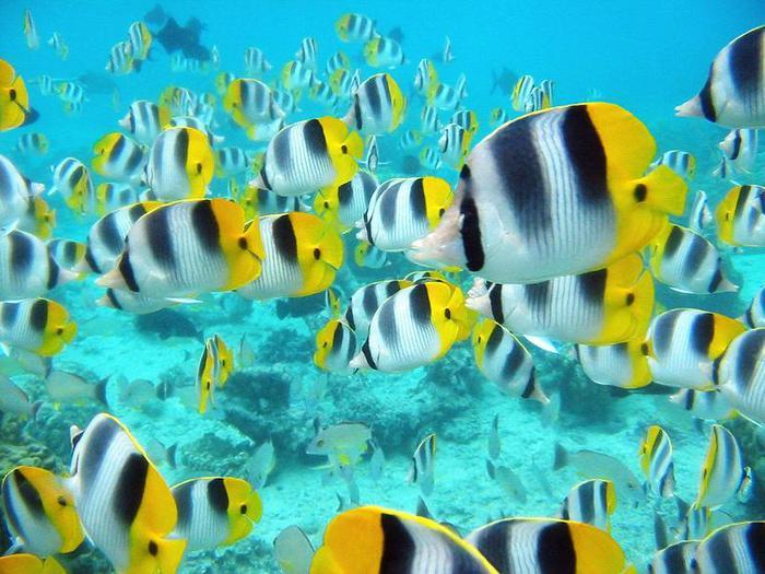 риба (700x525, 70Kb)