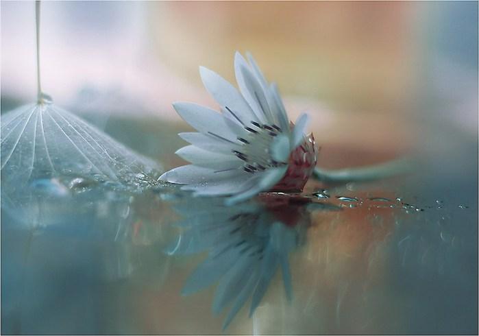 красивые цветы фото 2 (700x490, 44Kb)