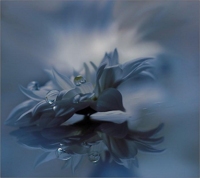 красивые цветы фото 3 (700x621, 46Kb)