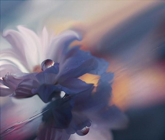 красивые цветы фото  8 (700x594, 43Kb)