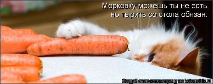 kotomatritsa_E (700x278, 30Kb)