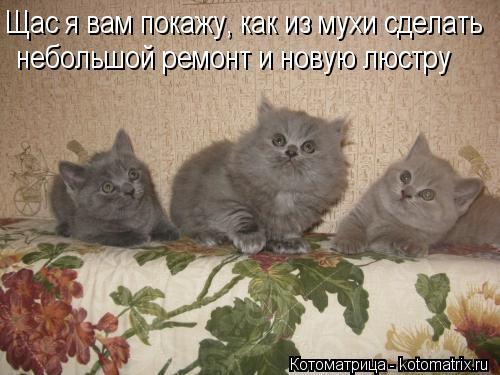 kotomatritsa_gF (500x375, 39Kb)