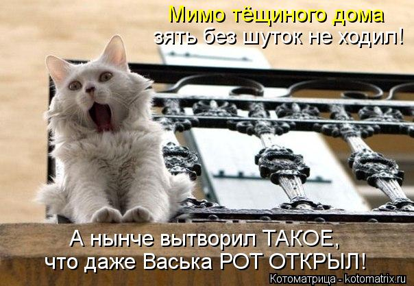 kotomatritsa_OQ (604x417, 57Kb)