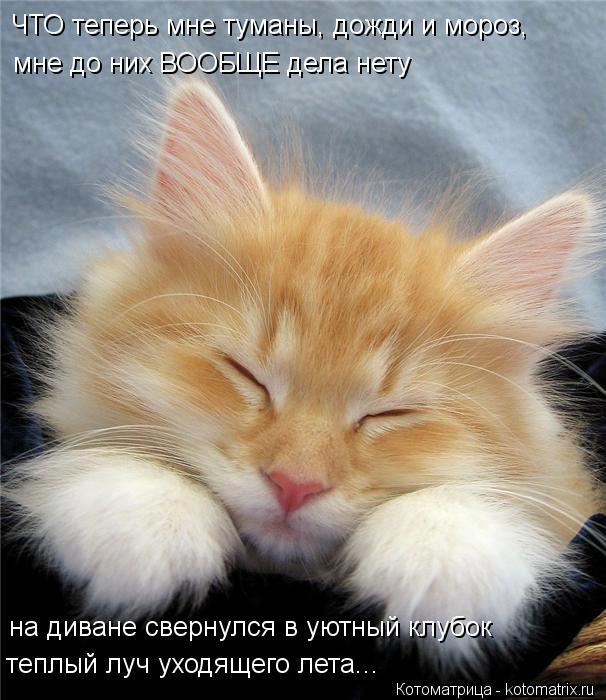 kotomatritsa_S- (606x700, 70Kb)