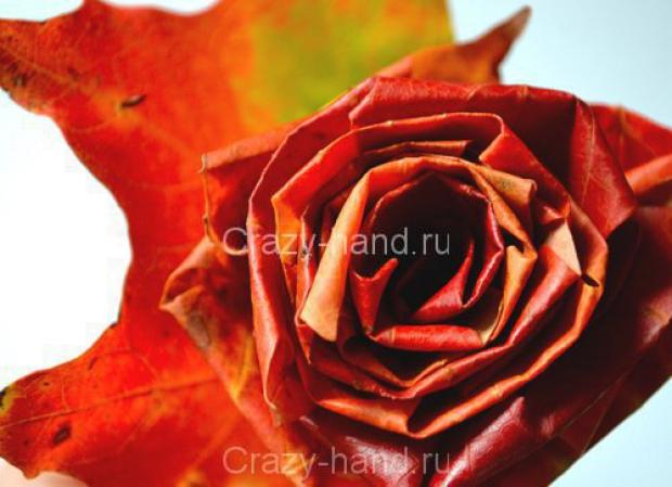 rose MK (7) (620x449, 189Kb)
