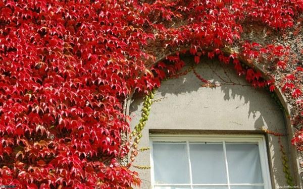 Дома, где живет осень2 (600x375, 93Kb)