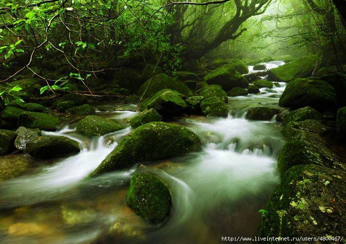 красивые пейзажи/4800467_1349297145_yakusima_1 (700x494, 225Kb)