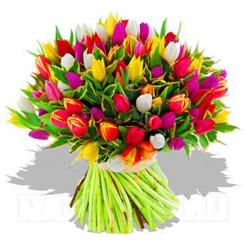 87782922_large_tulpen_2 (350x350, 26Kb)