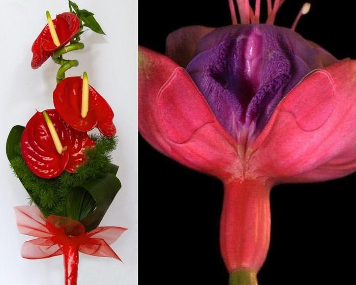Цветы для мужчины1 (700x560, 72Kb)