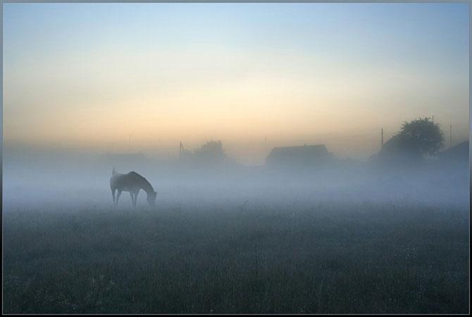природа_туман_жизнь (670x450, 24Kb)