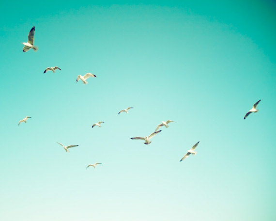 чайки на морем,птицы (570x456, 21Kb)
