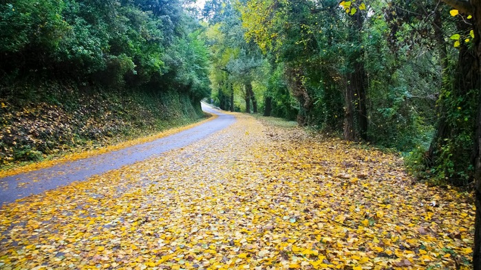 Природный парк Сан Мигель дель Фай. 49009
