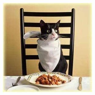 как правильно кормить кота/3518263_555 (310x310, 43Kb)