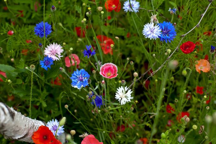 цветы (700x466, 325Kb)