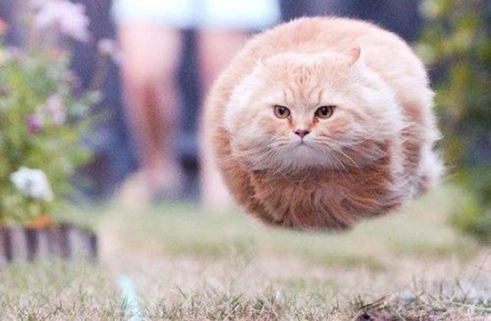 cats-32 (700x458, 71Kb)