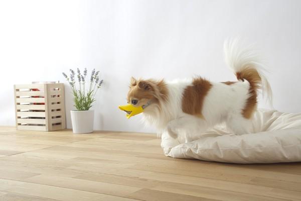 смешной намордник для маленьких собак 2 (600x400, 34Kb)