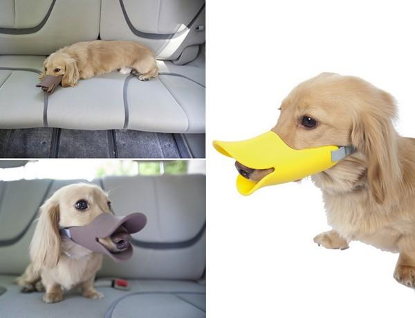 смешной намордник для маленьких собак 4 (600x459, 43Kb)