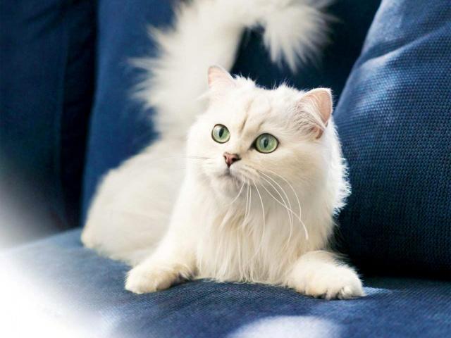 Кошка и порядок в квартире (640x480, 91Kb)