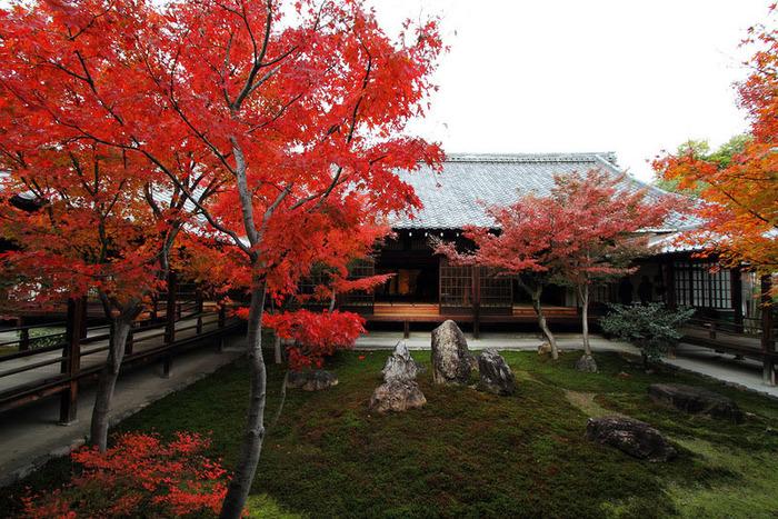 красивые фото осени киото япония 1 (700x467, 209Kb)